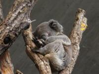 Ausflug: Zoo Zürich